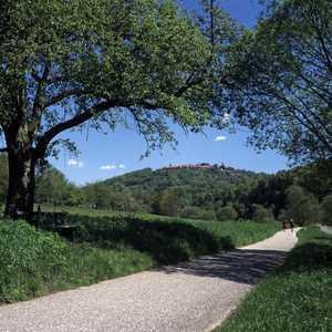 Sicht auf den Dilsberg vom Neckarradweg