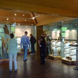 Urgeschichtliches Museum im Rathaus
