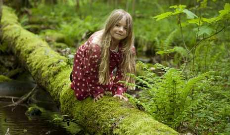 Wald_100401_06.jpg
